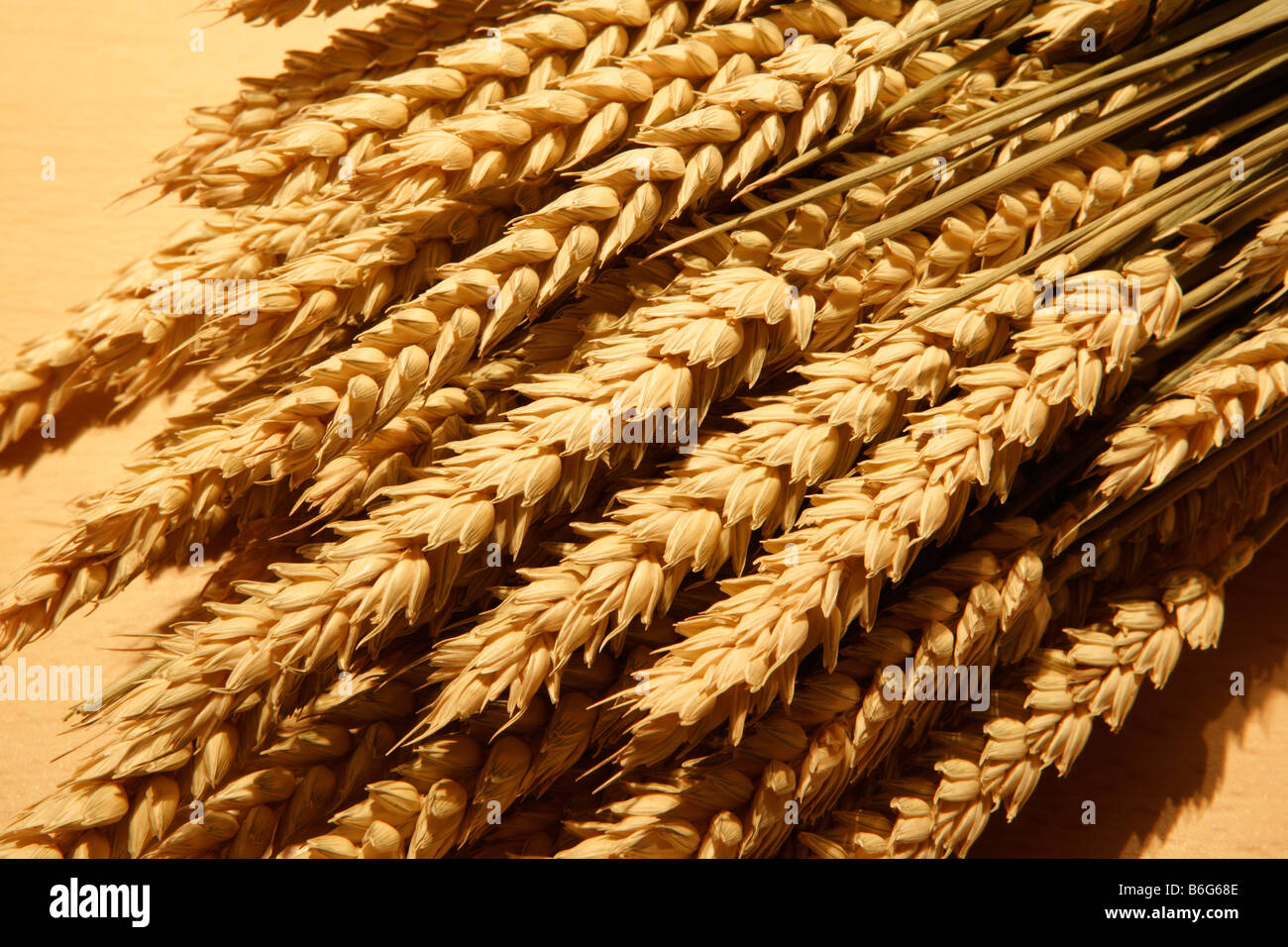 Wheat - Stock Image