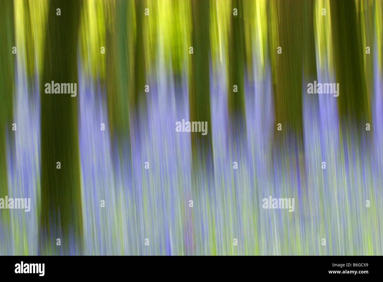 Abstract image of Bluebells Endymion non scripta in Beech woodland in Spring Taken May Ashridge Hertfordshire UK - Stock Image