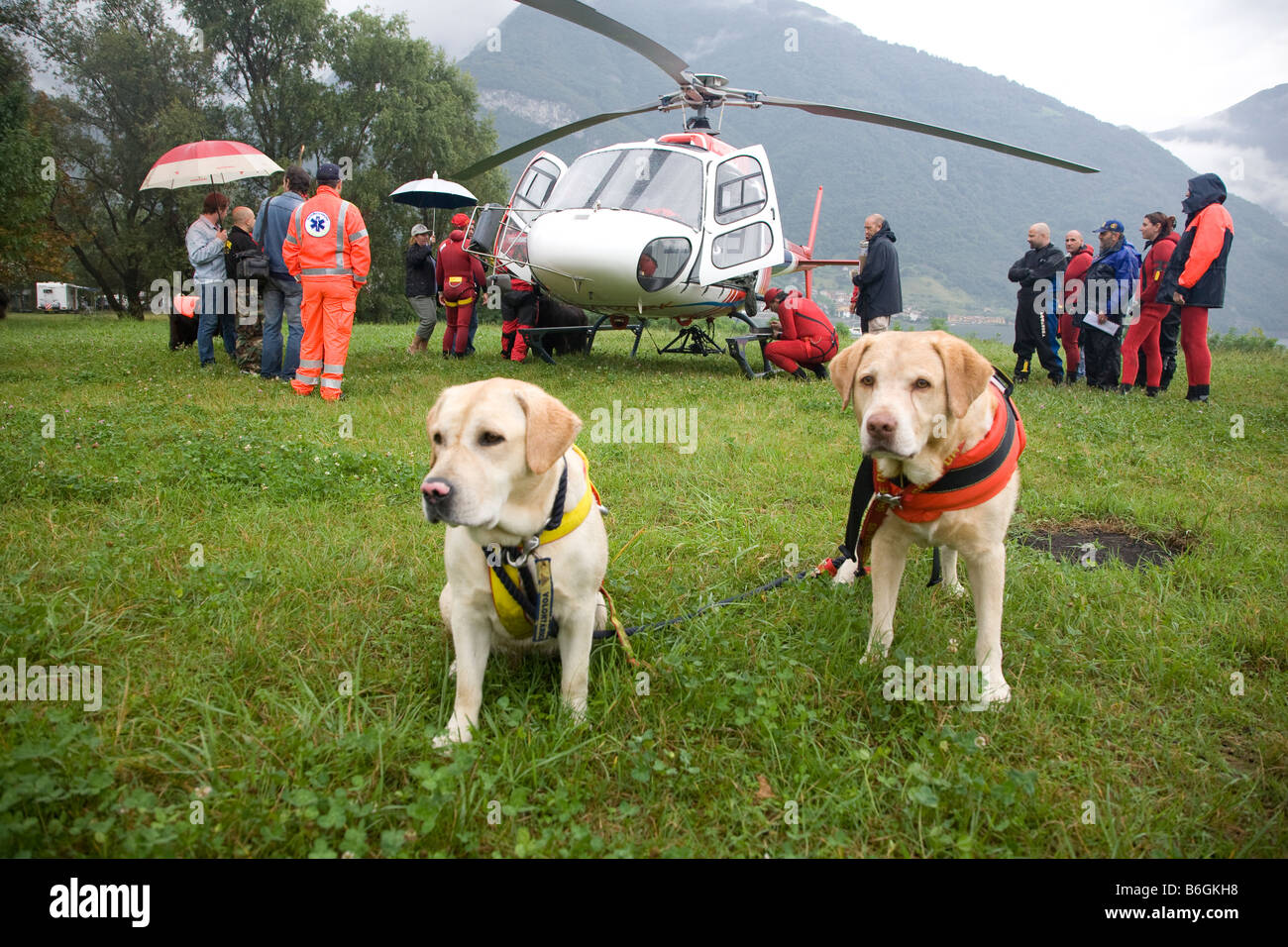 Two Labradors training to become rescue dogs They jump from the helicopter into water to rescue a drowning person - Stock Image