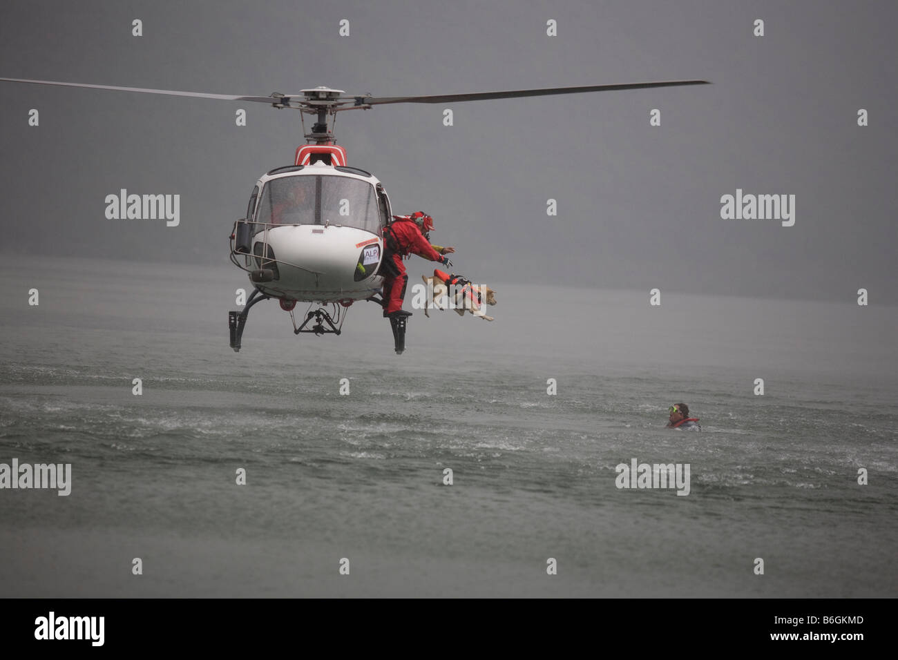 Rescue dogs in Italy training to rescue drowning people - Stock Image