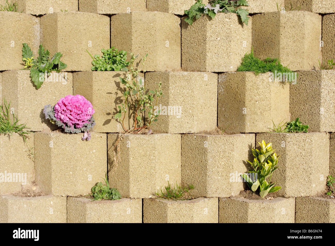A concrete hexagon retaining wall at Shotley with wild grown plants ...