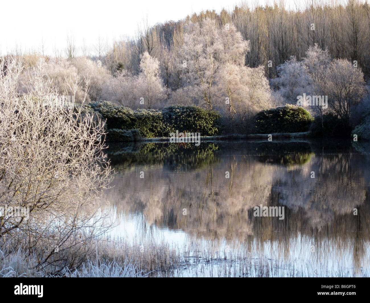 A winter lake with frost covered trees reflected in the pure, clear lake water - Stock Image