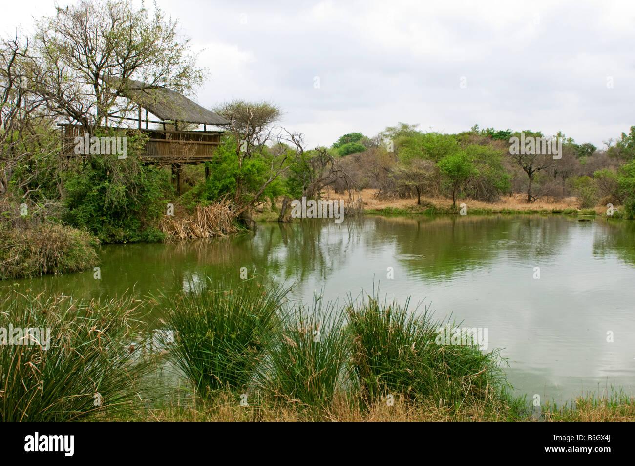 HIPPO HIDE water hole bushland bush wildlife wild green water edge waterhole south-Afrika south africa landscape - Stock Image
