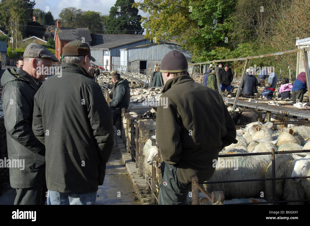 Farmers congregate at sheep pens of a a thriving livestock auction market - Stock Image