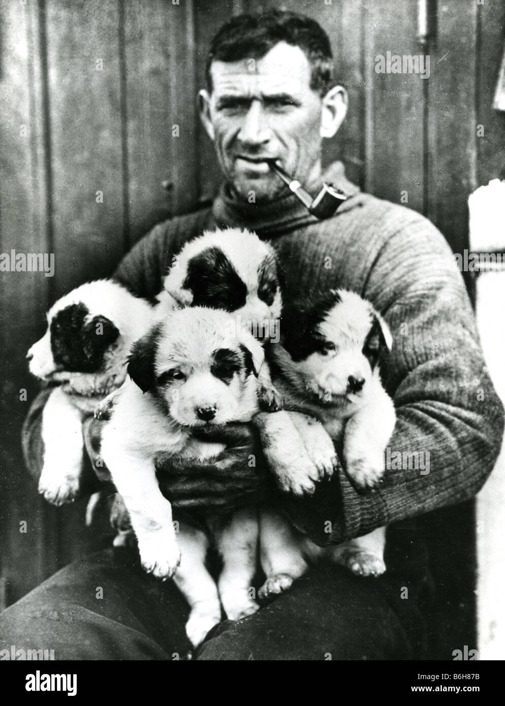 SHACKLETON ANTARCTIC EXPEDITION 1914/15  Tom Crean with Husky puppies born aboard ship in January 1915. Photo by - Stock Image
