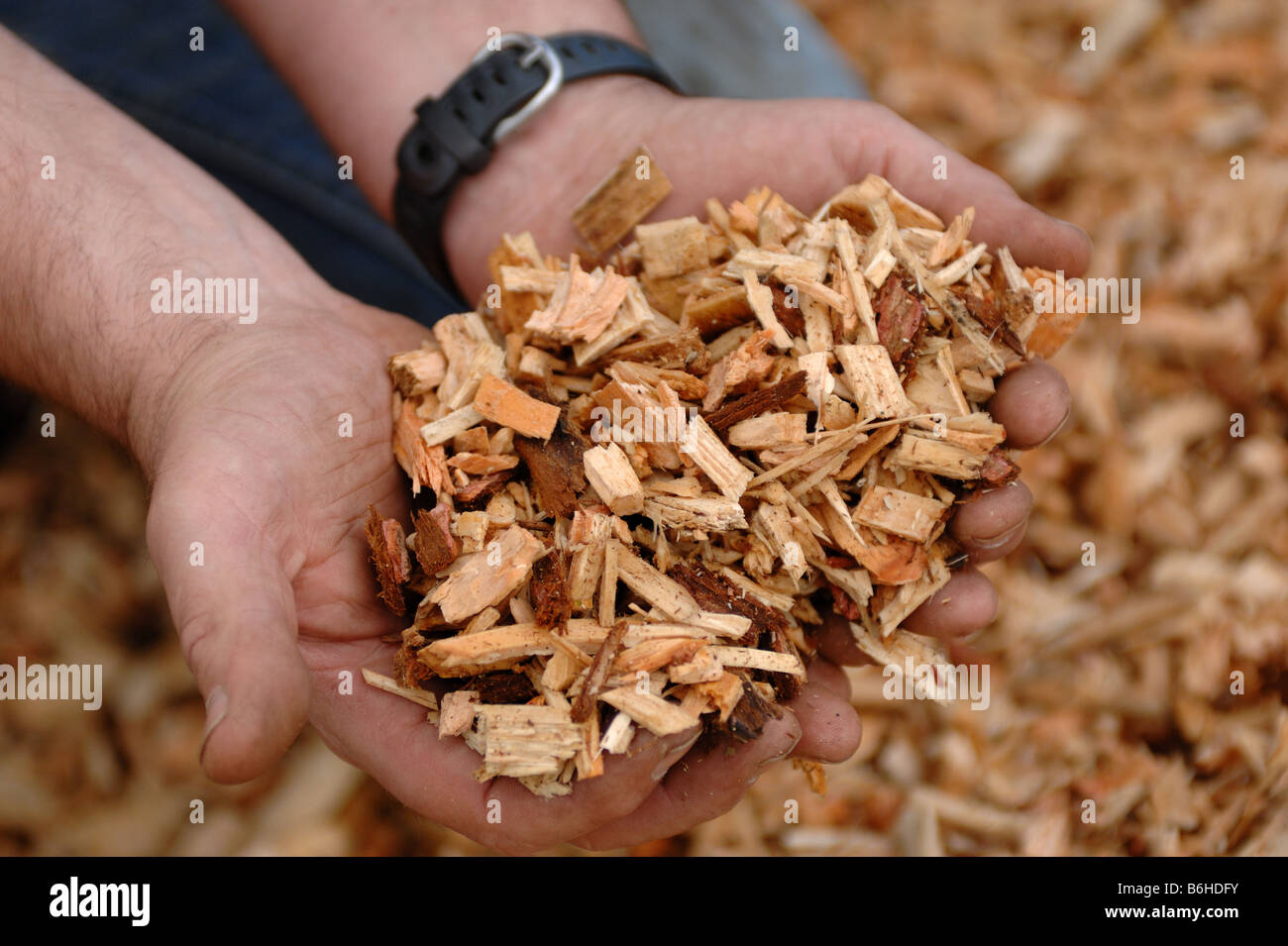 Using a mobile Woodchip machine to chop up logs for use in a biomass boiler - Stock Image