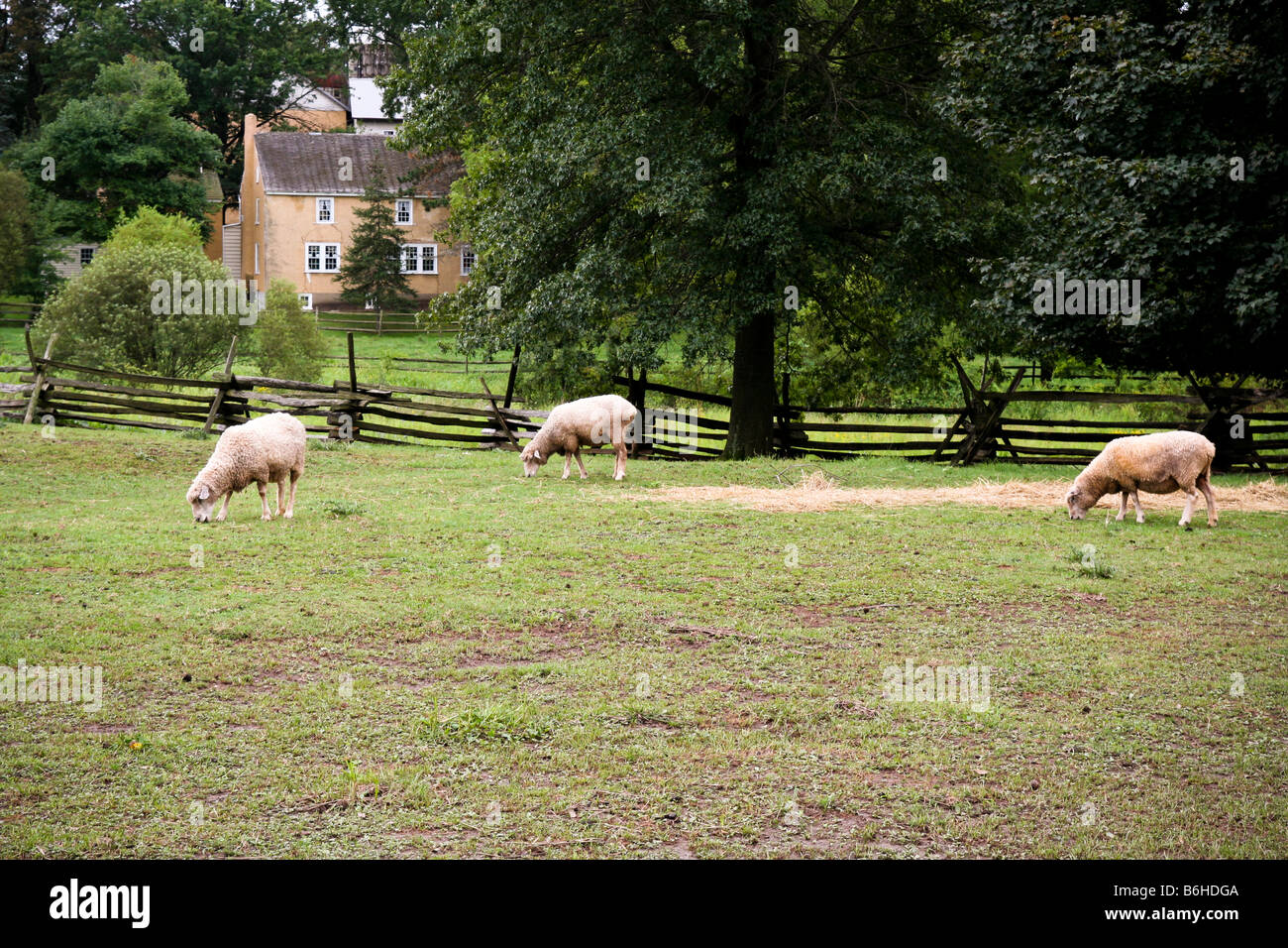 Three sheep grazing in a pastoral 18th century setting. - Stock Image