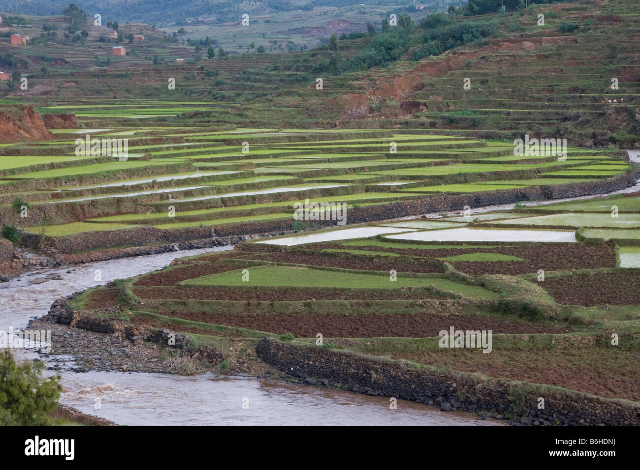 Terraced paddy fields Central Madagascar - Stock Image