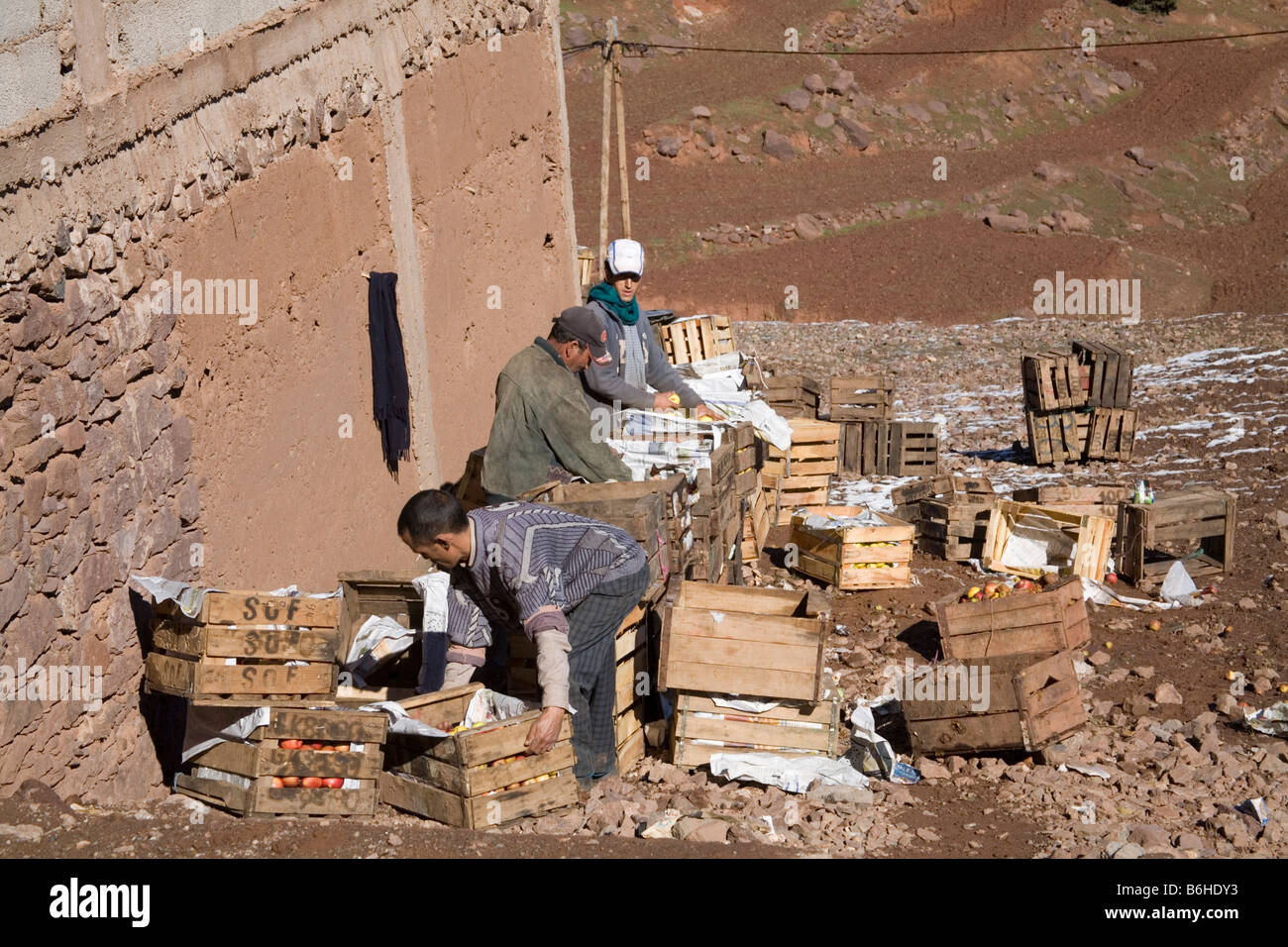 Morocco North Africa December Three Berber farmers sorting crates of apples stored from the fruit harvest - Stock Image