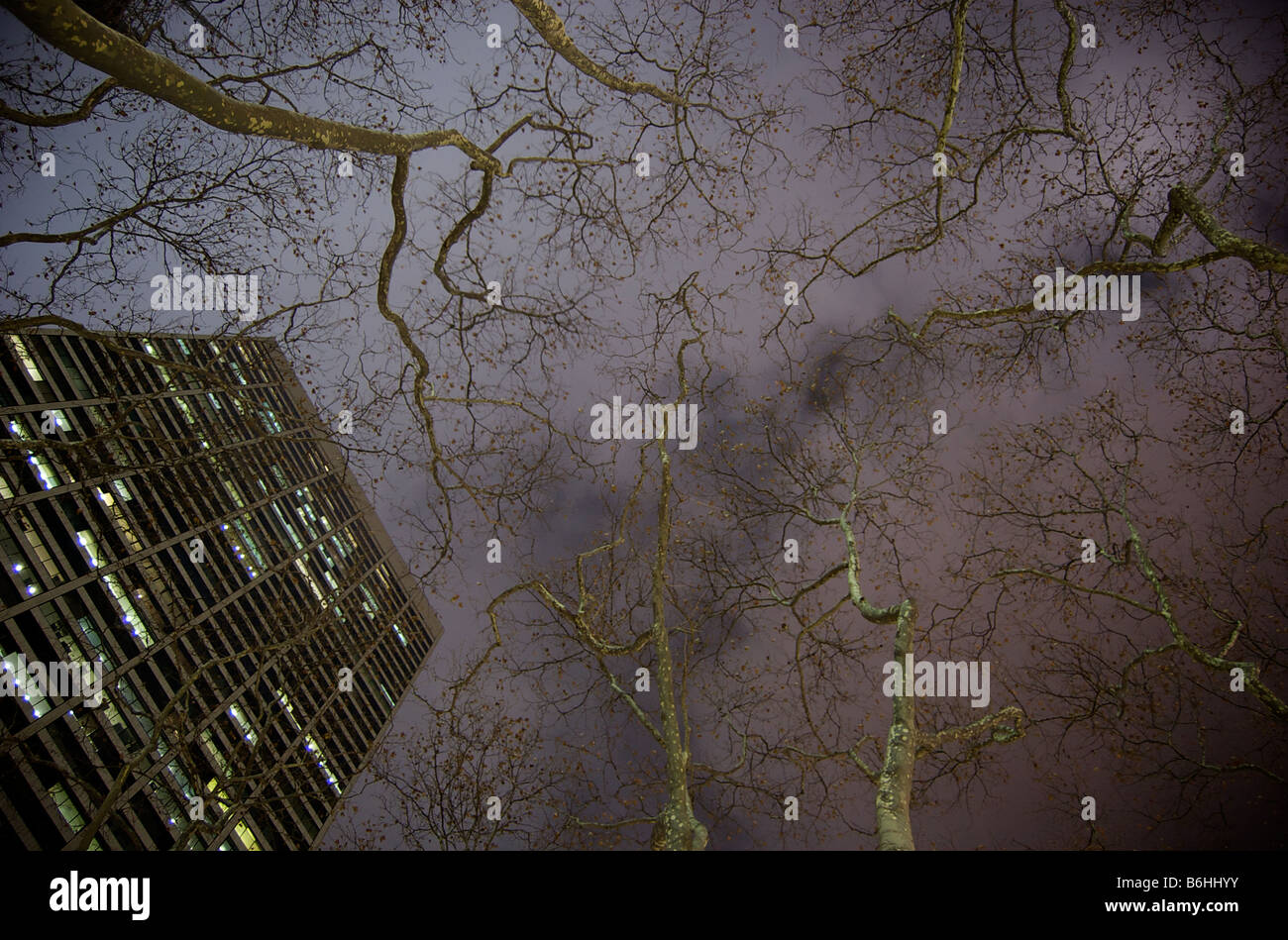 Nighttime View Up At W R Grace Building and Tree Branches in Bryant Park NYC (For Editorial Use Only) - Stock Image