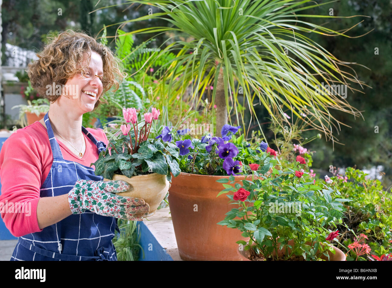 woman holding a pot of cyclamen in her garden - Stock Image