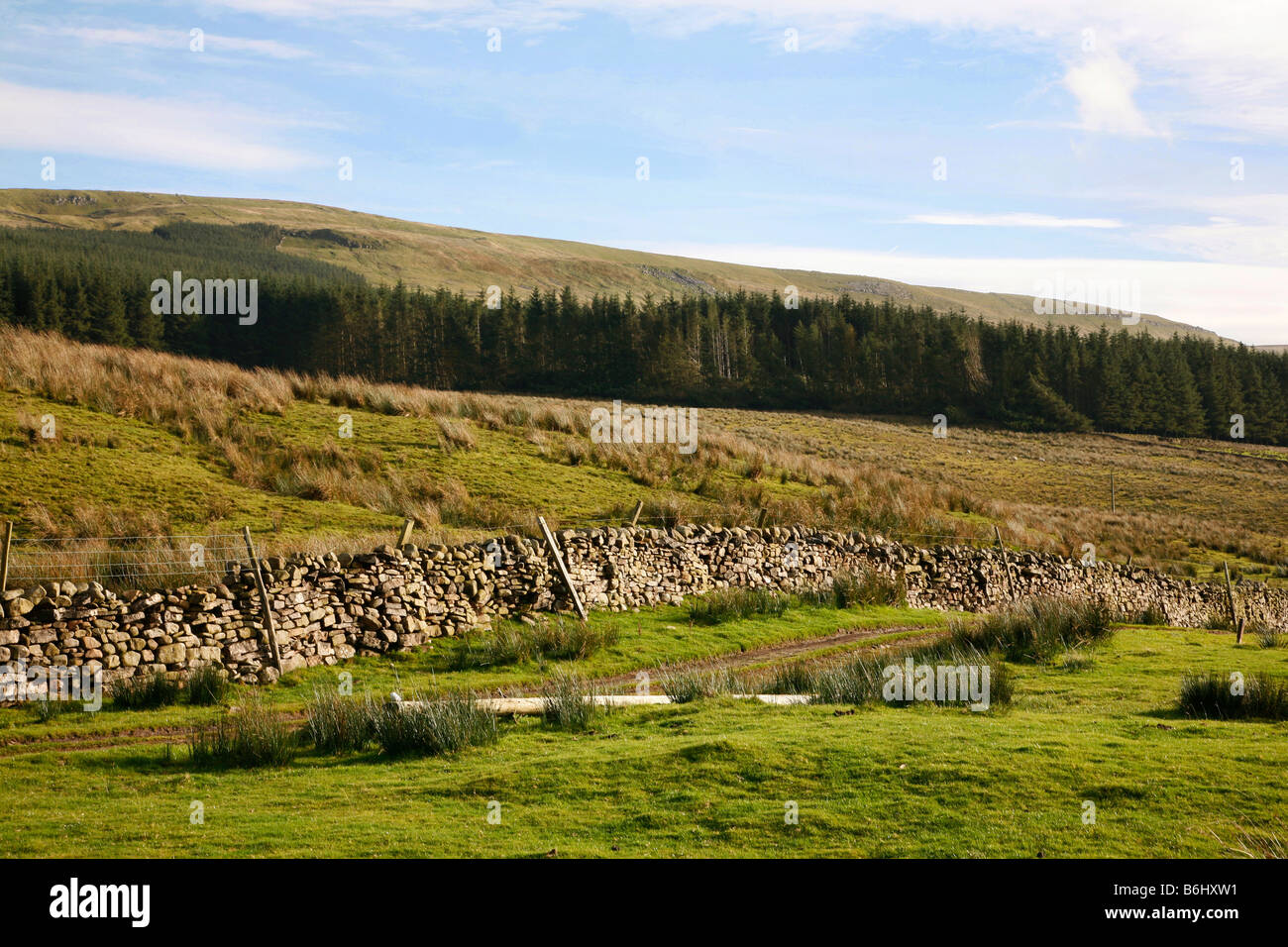 Dales scenery near the small market town of Hawes in Wensleydale, set within the Yorkshire Dales National Park Stock Photo