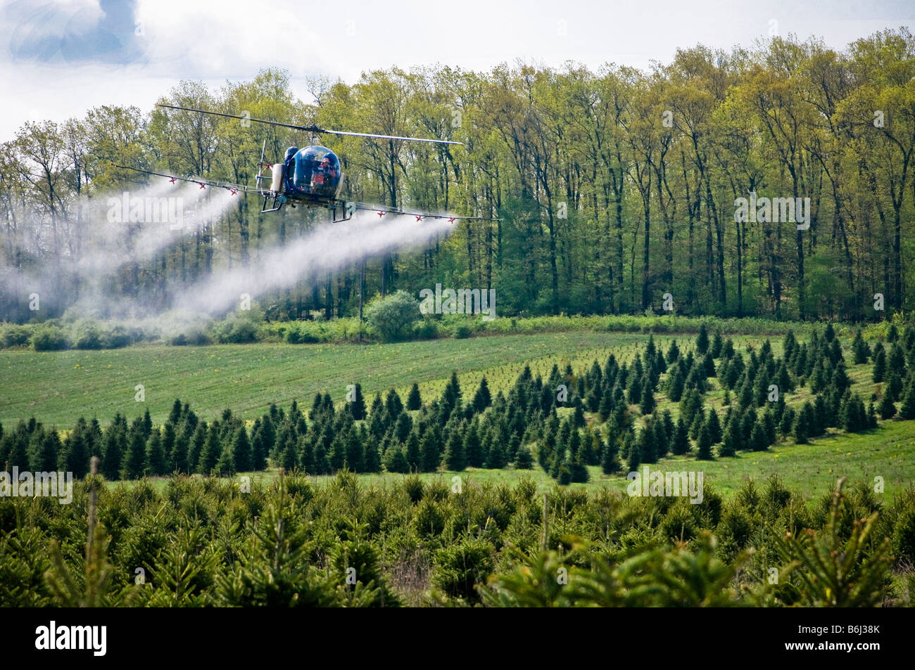 Low flying helicopter sprays chemical pesticide over tree farm forest. - Stock Image