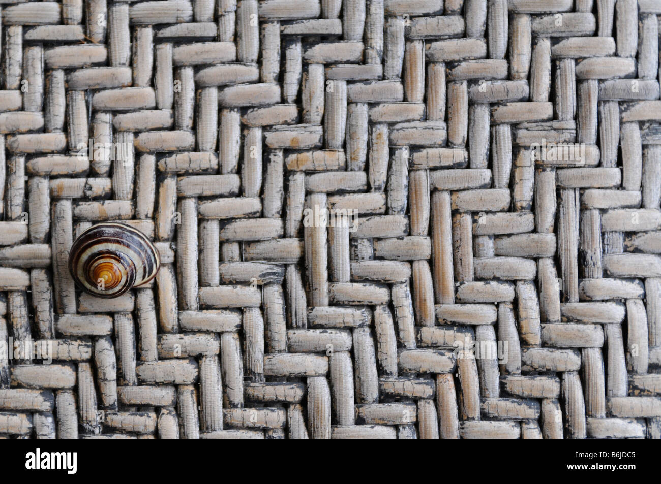 close-up detail of a common snail on a common wicker bench - Stock Image