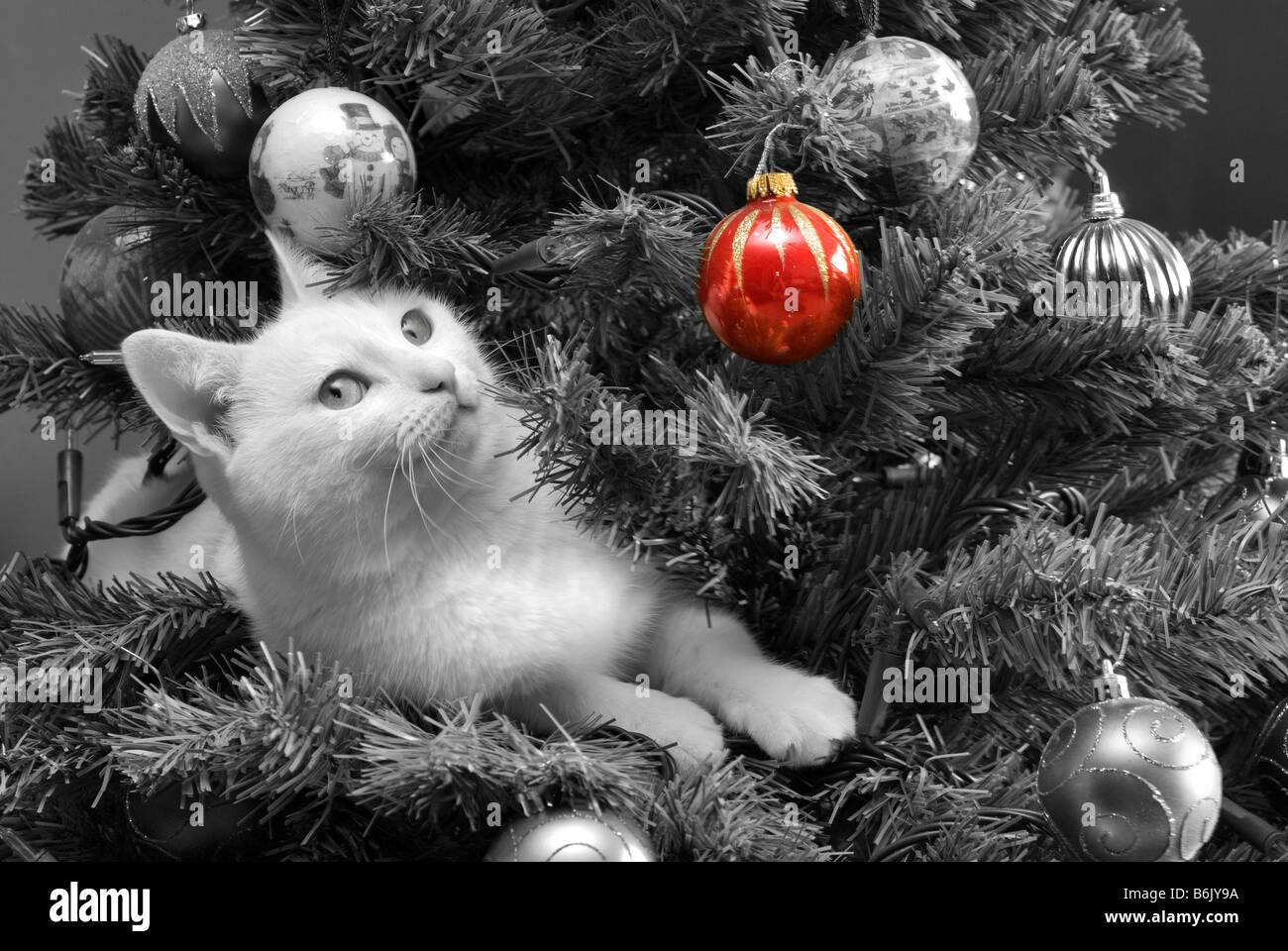 black and white photo of a white cat in a decorated christmas tree with a colour popping effect to show one red bauble