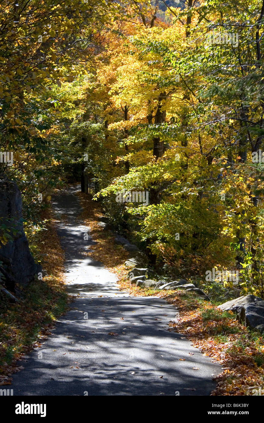 Tree lined footpath in the Franconia Notch State Park New Hampshire USA Stock Photo