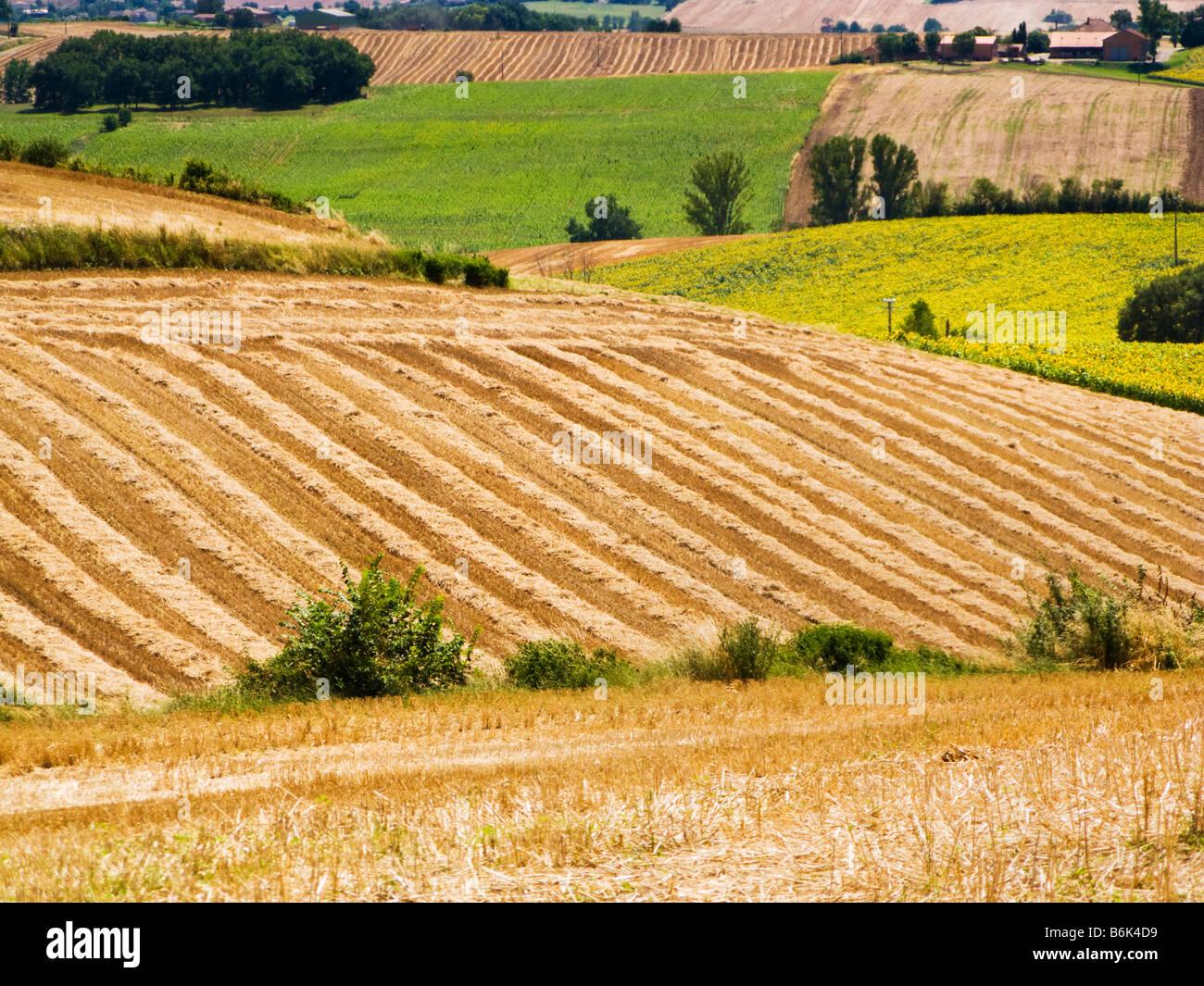 Wheat fields in Tarn et Garonne, southwest France, Europe - Stock Image