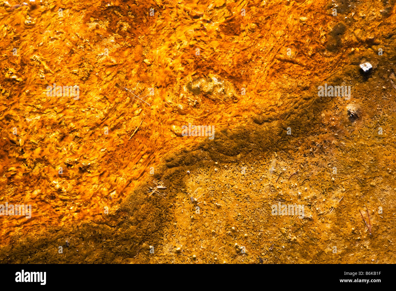 Thermophile mat Stock Photo