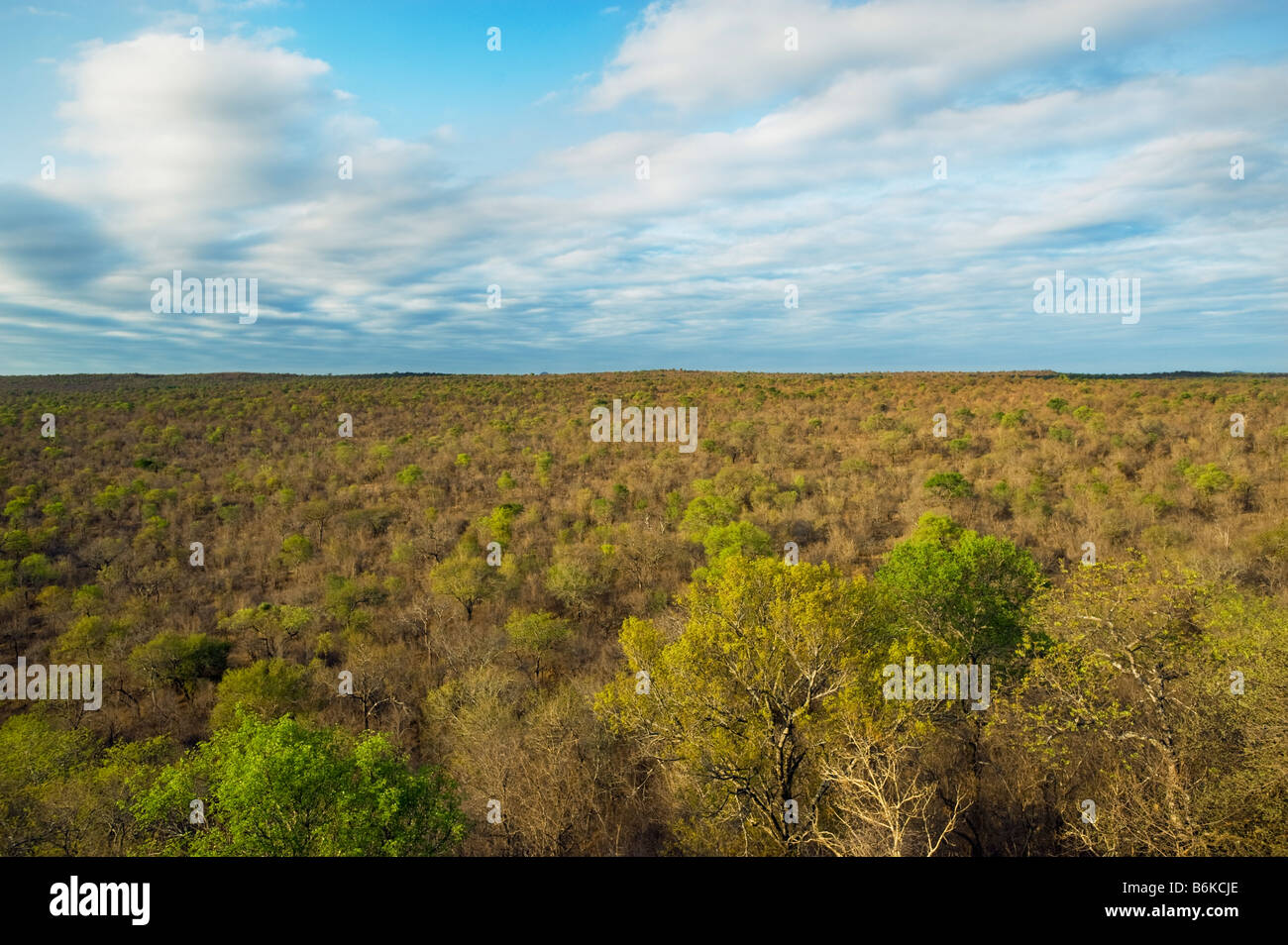 wide view landscape south africa desert red dust dirt road drive way safari savannah woodland bush bushland dryness - Stock Image