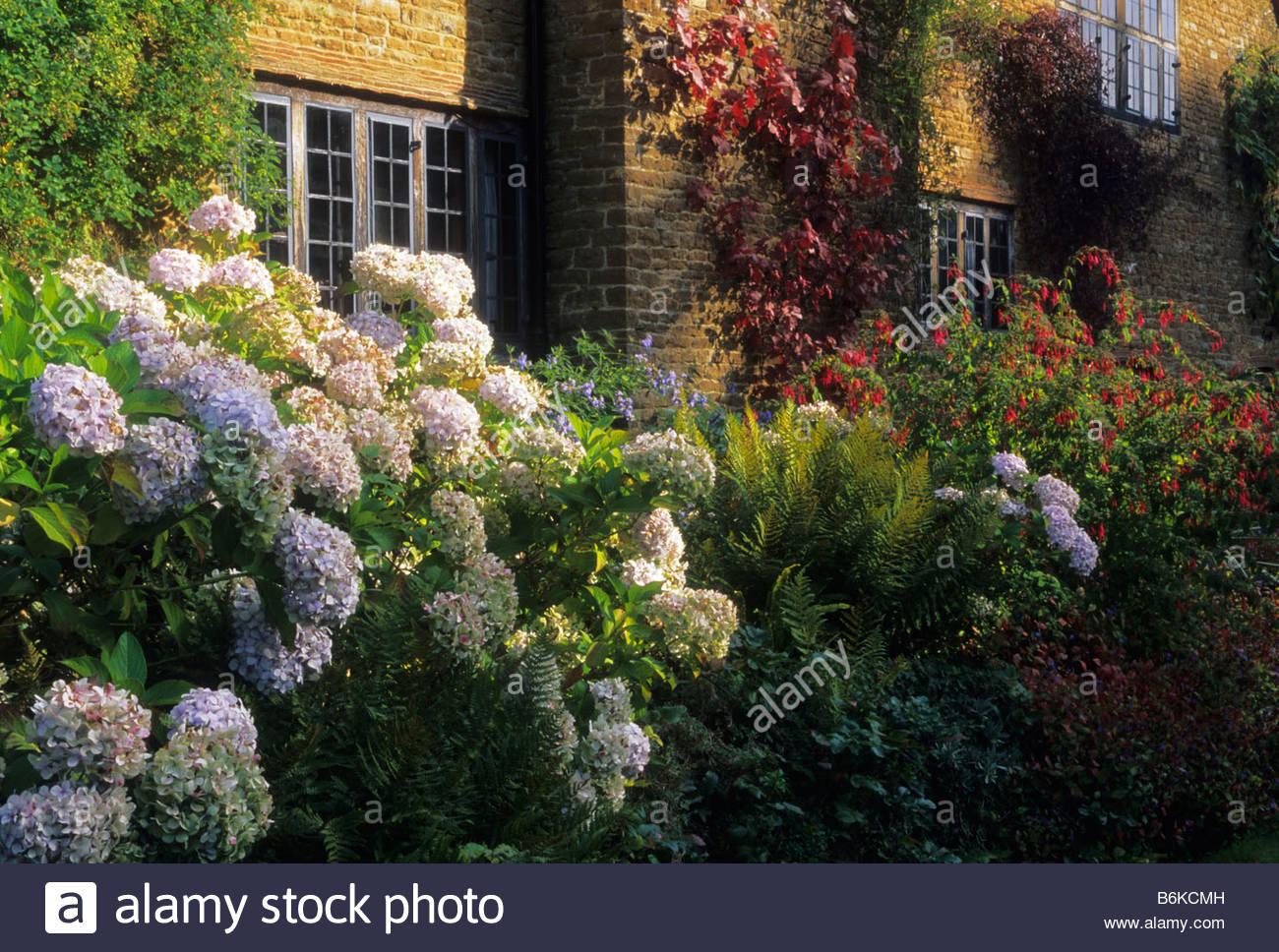 Munstead Wood Surrey Gertrude Jekyll Hydrangea macrophylla in autumn on