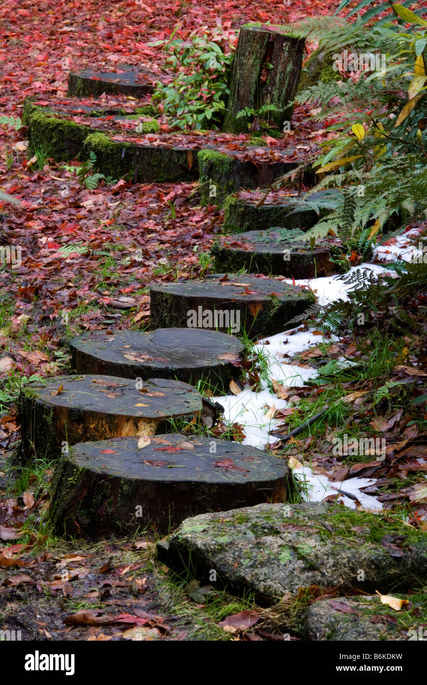 Wooden stepping stones in the Japanese garden at Giggle Alley in Eskdale Cumbria - Stock Image