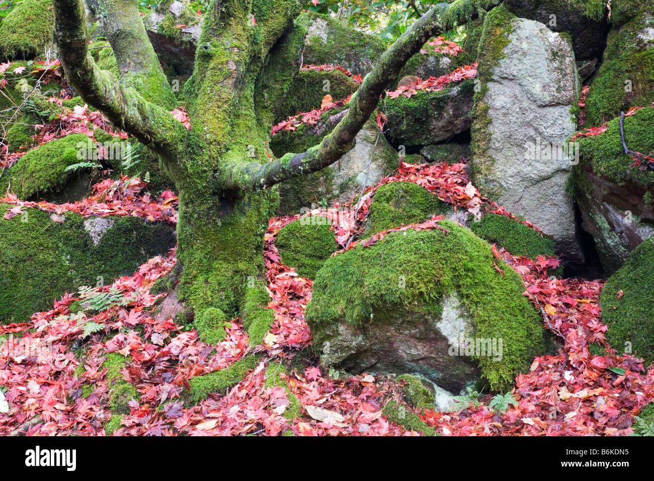 Hidden Japanese garden in Eskdale Cumbria Stock Photo
