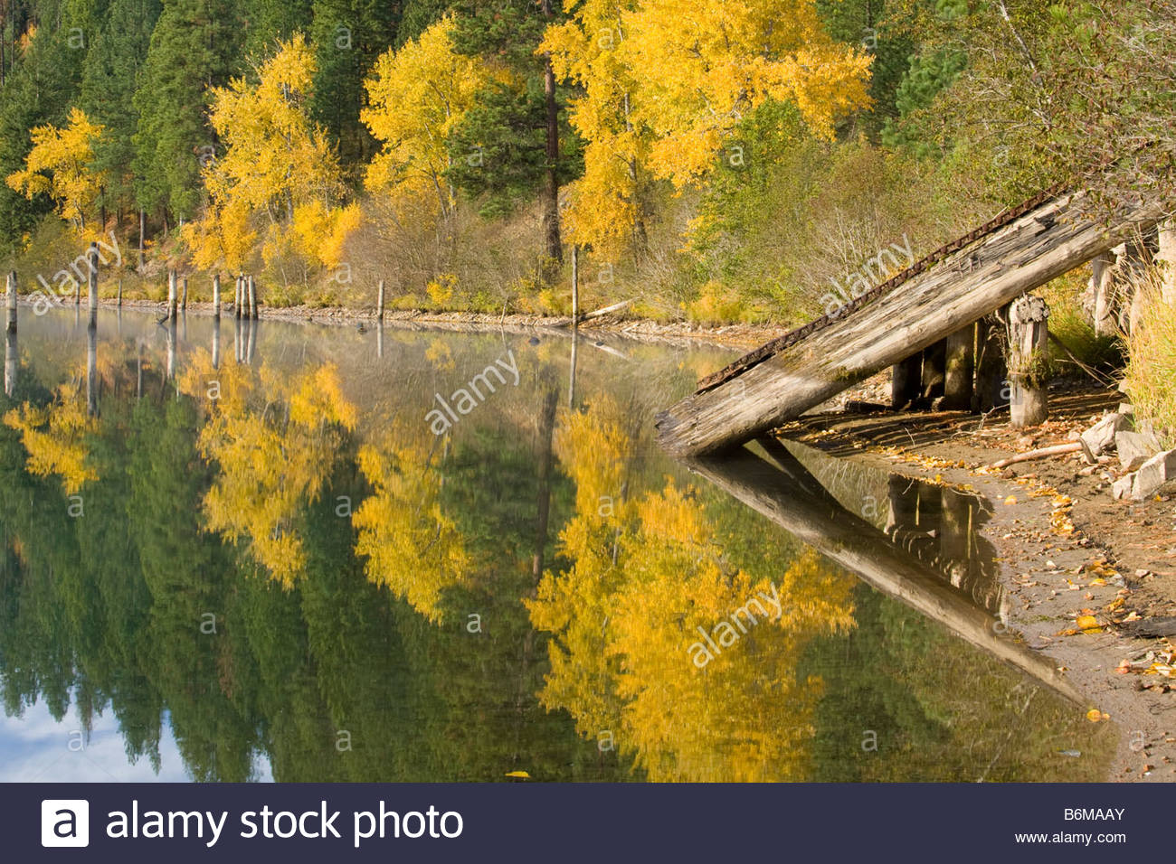 Reflections in the water with autumn colors. An old log launch for sliding logs into the river for transport on - Stock Image