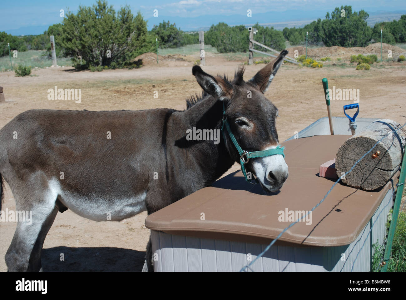 BURROS HARVEY/'S RANCH HIGHEST IN AMERICA NEW MEXICO