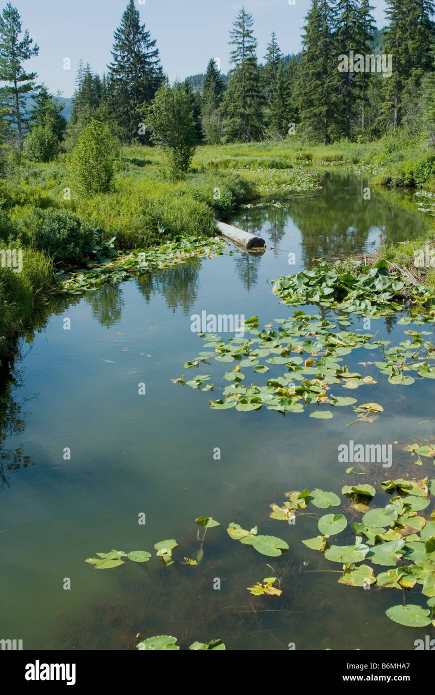 Wilderness pond in Whistler, British Columbia, Canada - Stock Image