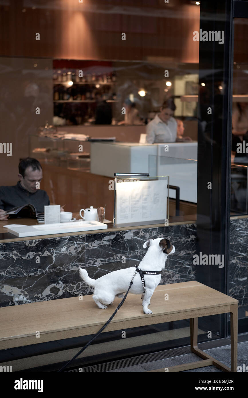 JACK RUSSELL LEFT OUTSIDE CAFE - Stock Image