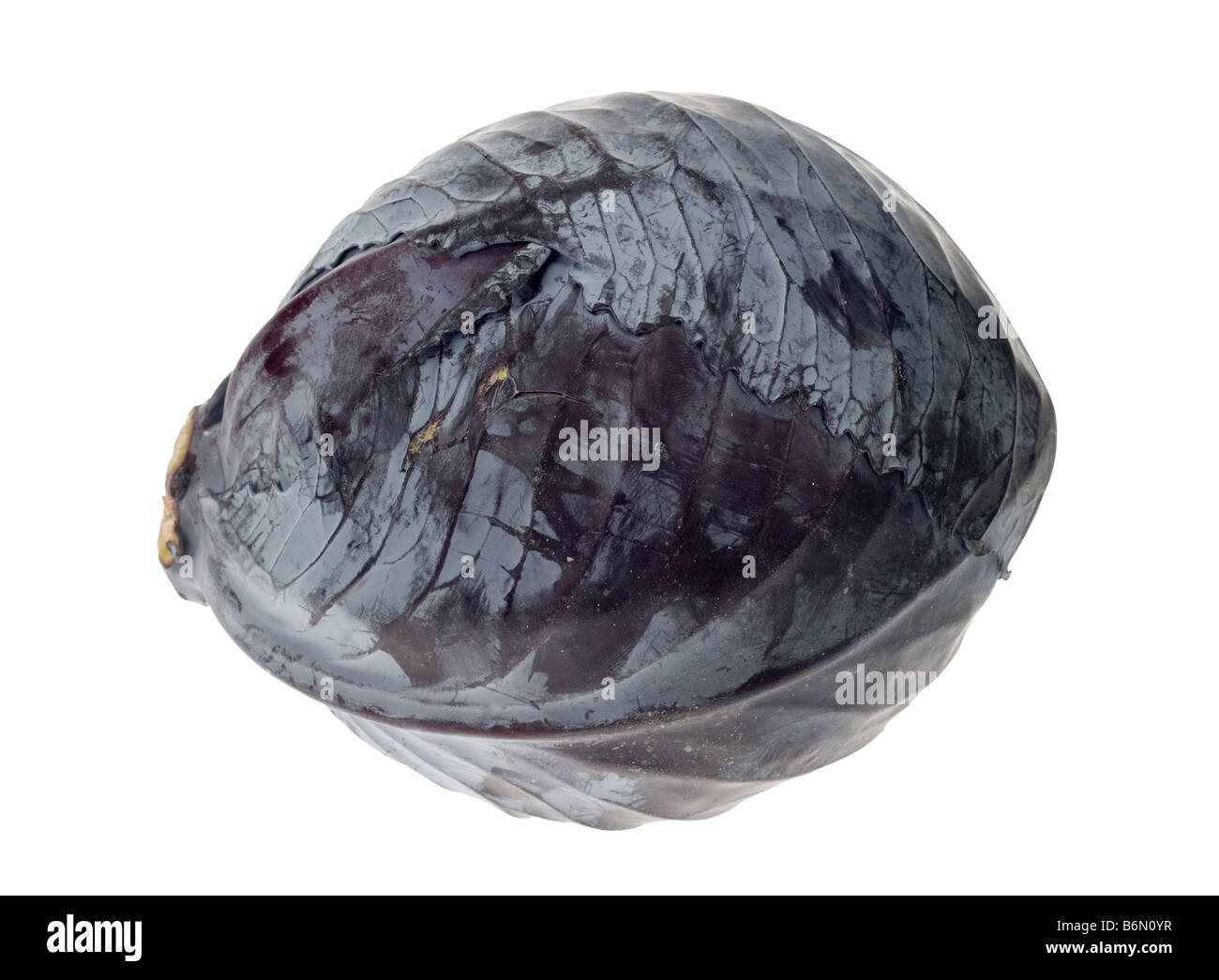 fresh red cabbage isolated on a white background - Stock Image