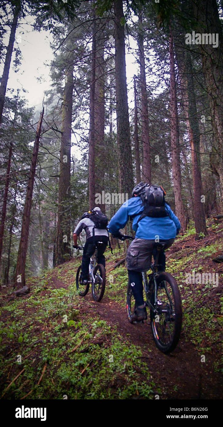 mountain bikers on Bear Creek Trail, Camp Nelson, Sequoia, California Stock Photo