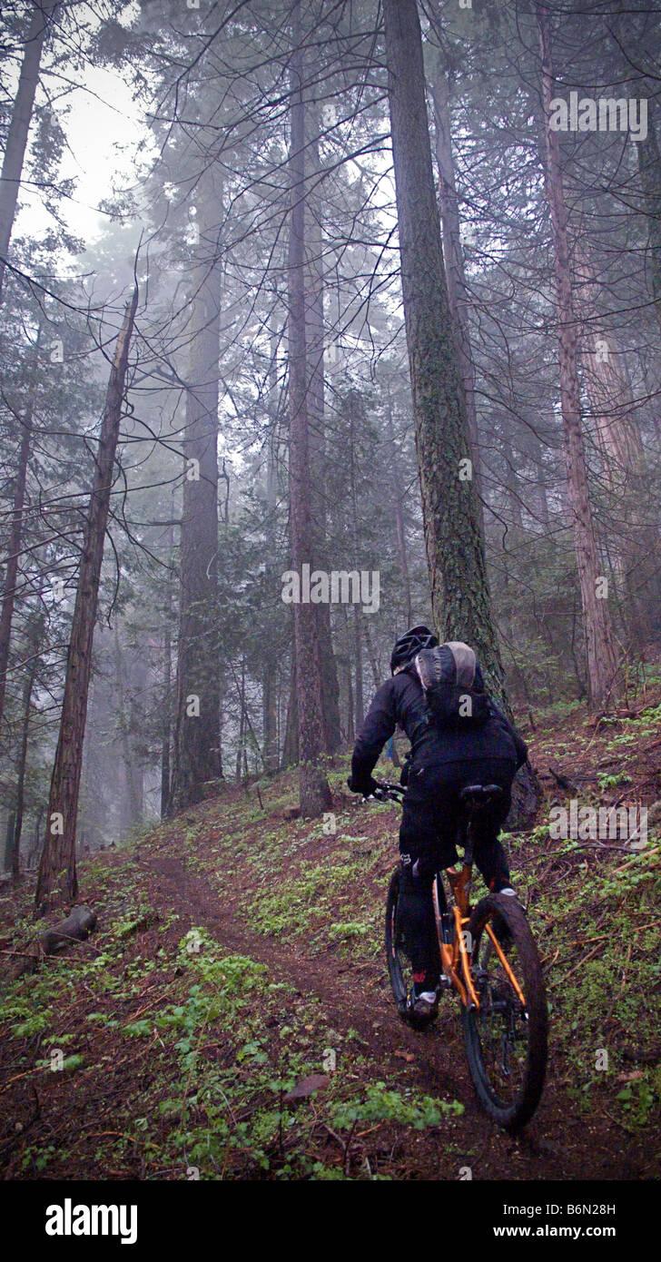 mountain biker on Bear Creek Trail, Camp Nelson, Sequoia, California Stock Photo