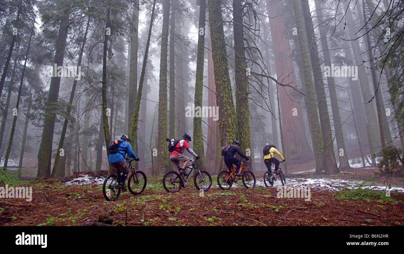 mountain bikers on Bear Creek Trail, Camp Nelson, California Stock Photo