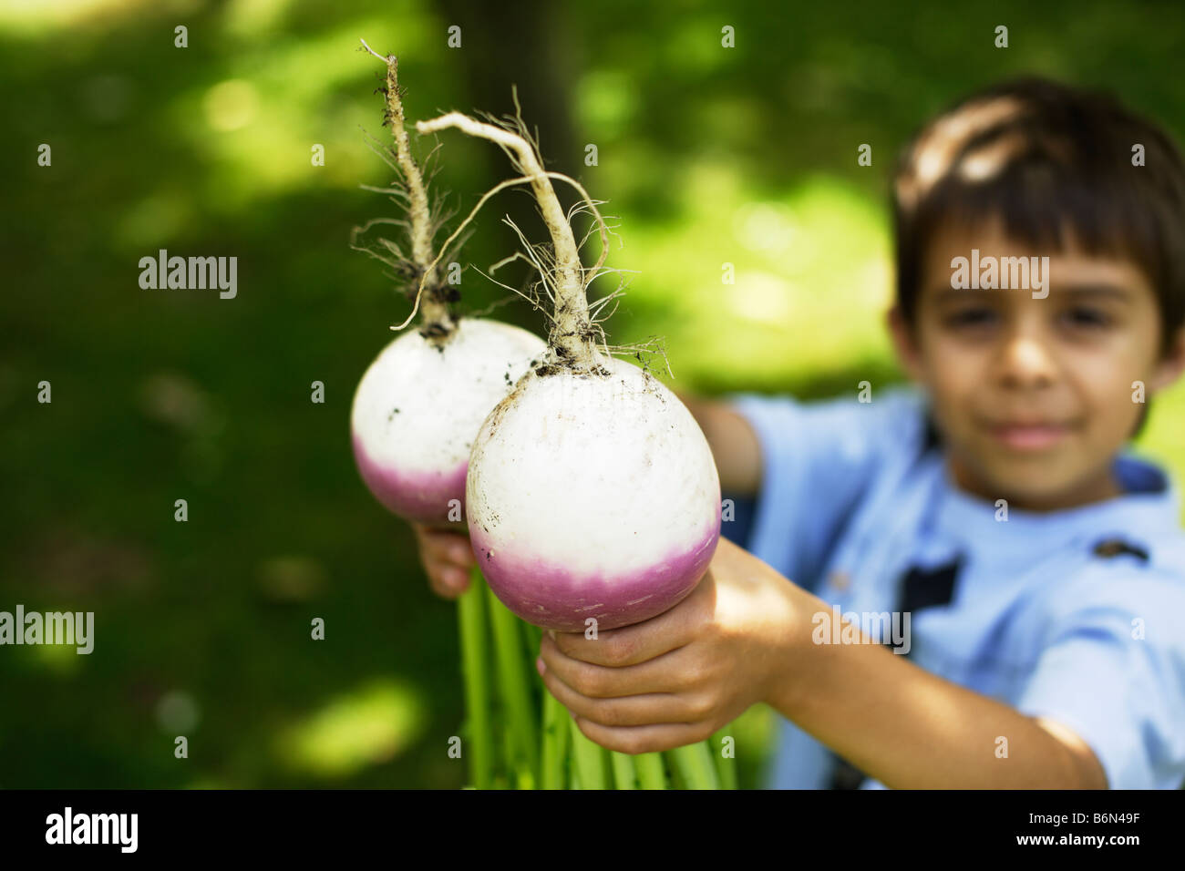 Six year old boy holds two organic home grown turnips - Stock Image