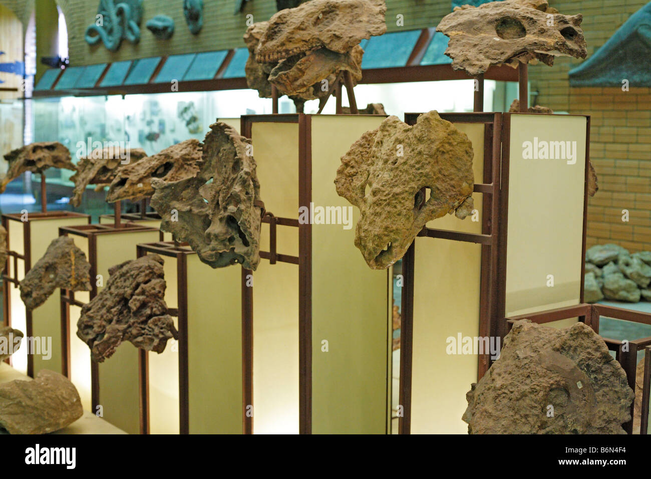 Palaeontology museum, Moscow, Russia - Stock Image
