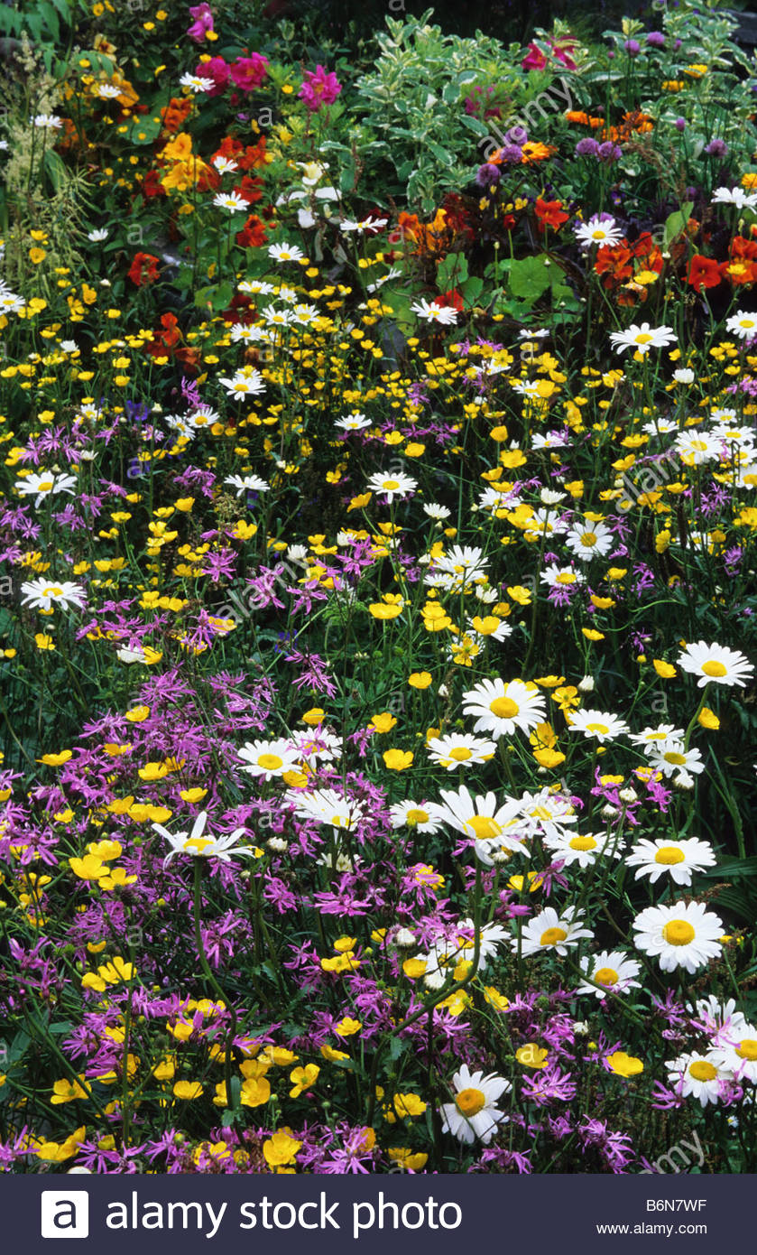 Wild Flowers And Cottage Garden Flowery Mead Plants Summer May