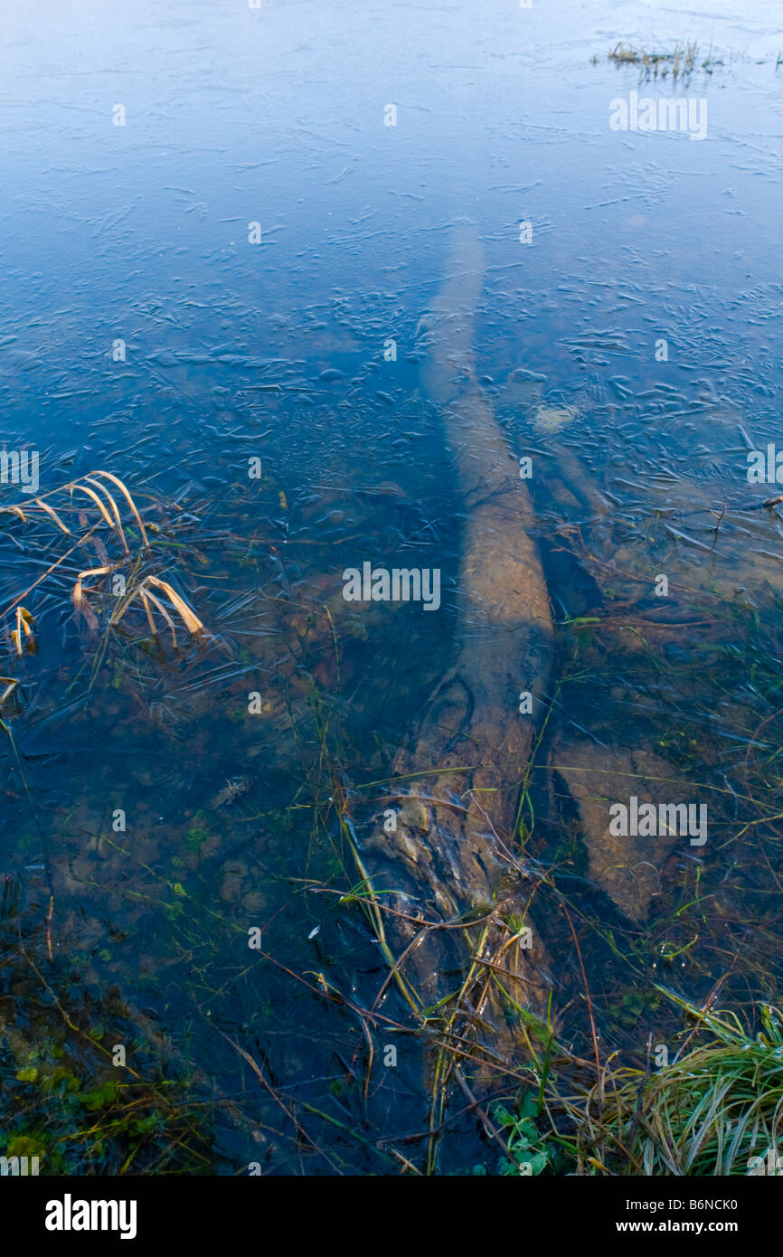 Tree submerged bellow icy water surface - Stock Image