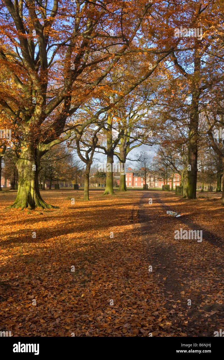 Woodland park at Dunham Massey Hall and Park,  Altrincham Cheshire - Stock Image
