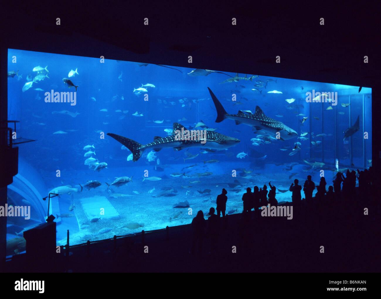 Main Tank Window The Largest Aquarium Window In The World At Stock