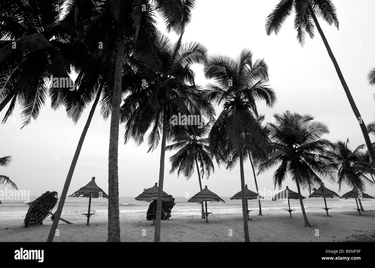 Ghana, West Coast. White Sands beach, Coconut trees. - Stock Image