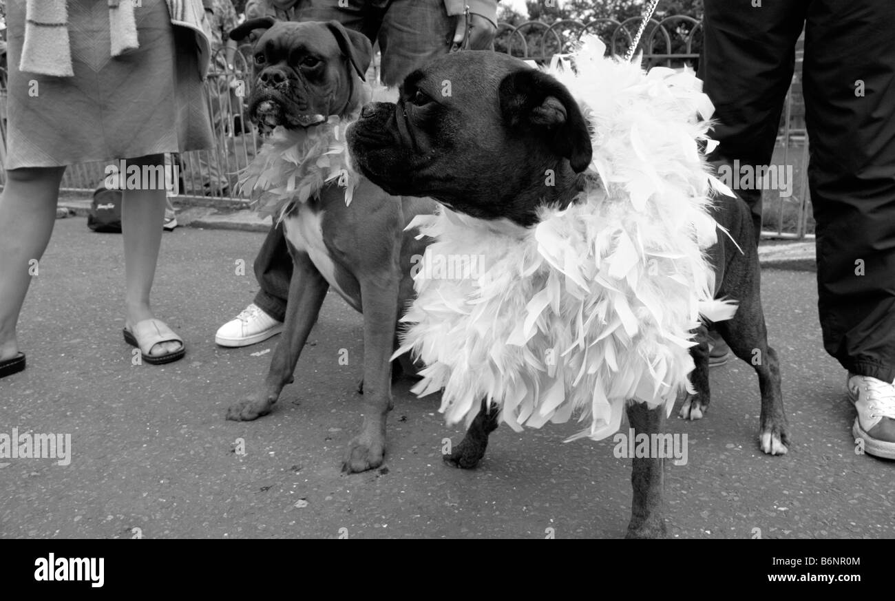 UNITED KINGDOM, ENGLAND, 6th August 2005. Two dogs are dressed up for Brighton Pride, the annual Gay Pride event. - Stock Image