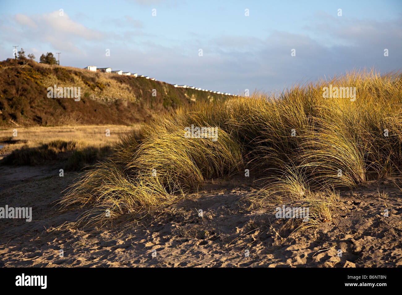 Marram grass Ammophilia arenaria on dunes near Aberthaw with holiday caravans on cliff edge Wales UK - Stock Image