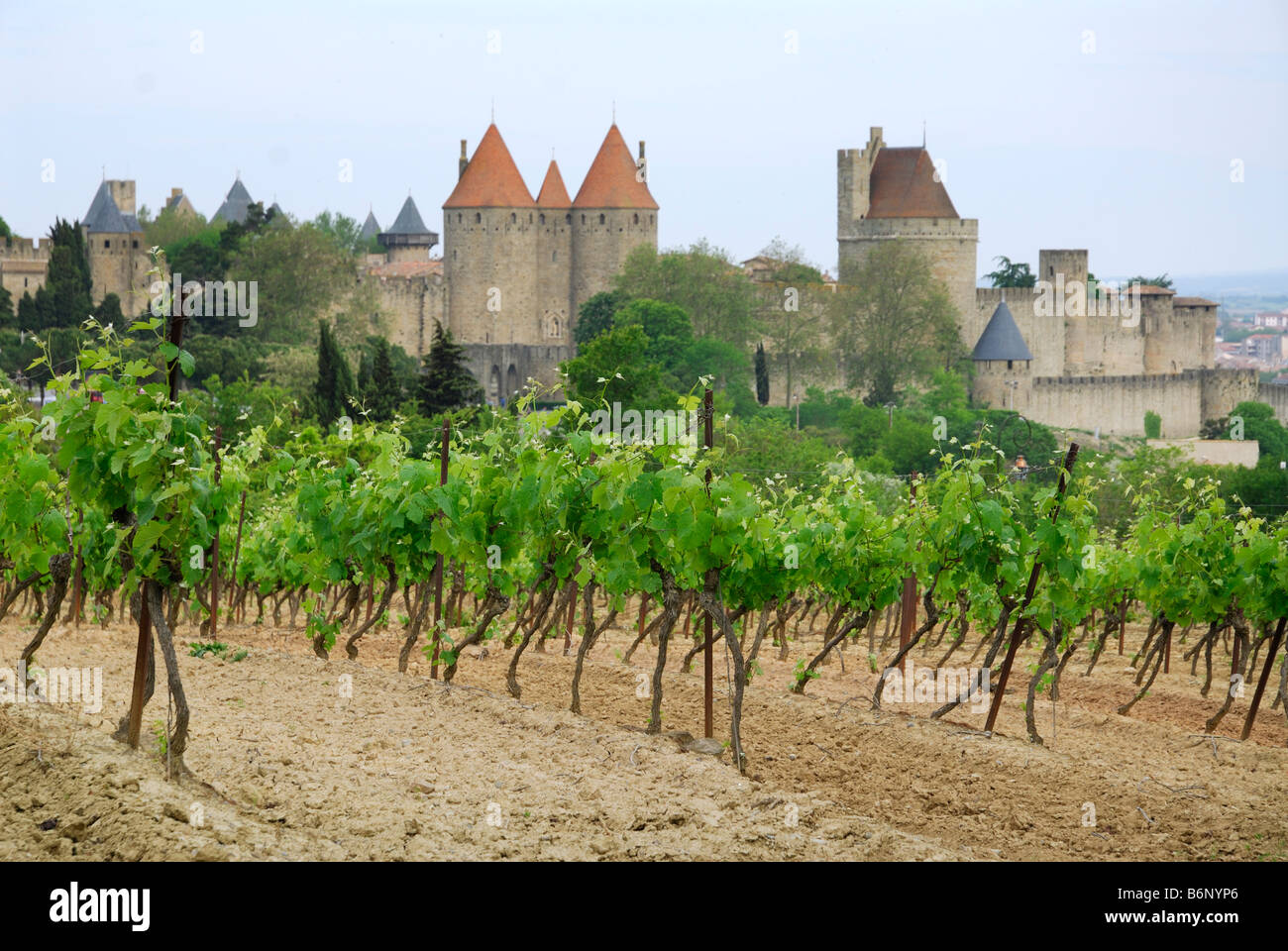 Carcassonne France Grape vines and the medieval walled Cité - Stock Image