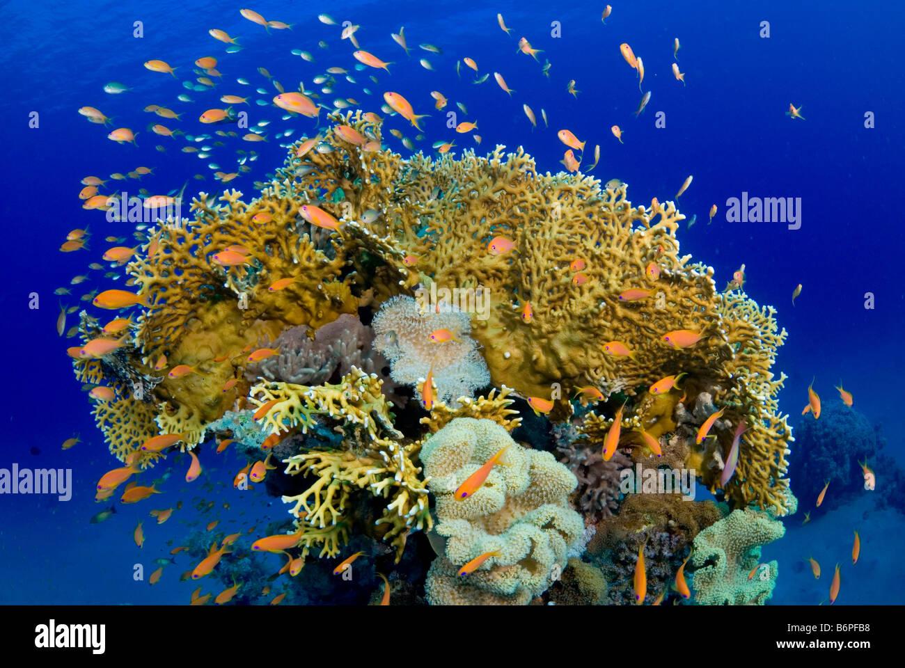 Marsa Abu Dabbab, Egypt, Red Sea - Stock Image