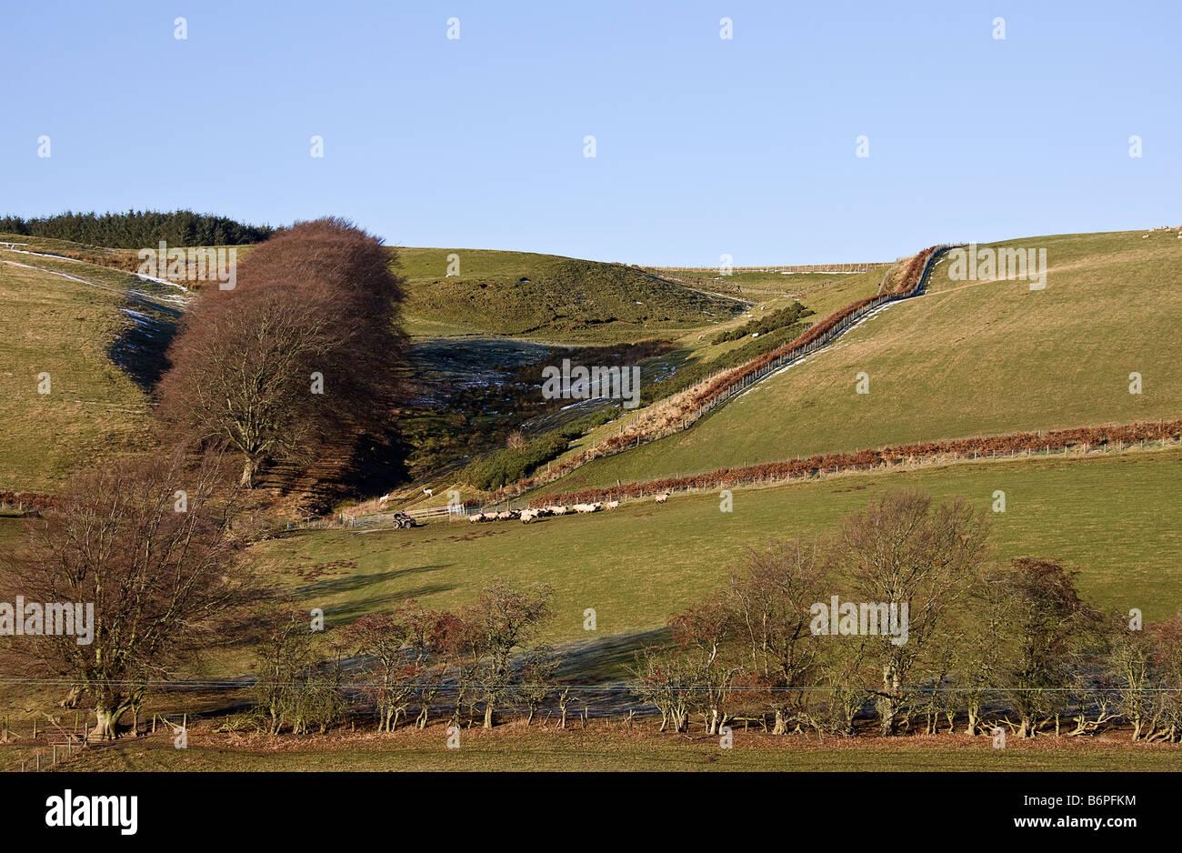 A pastoral landscape in the Scottish Borders. - Stock Image