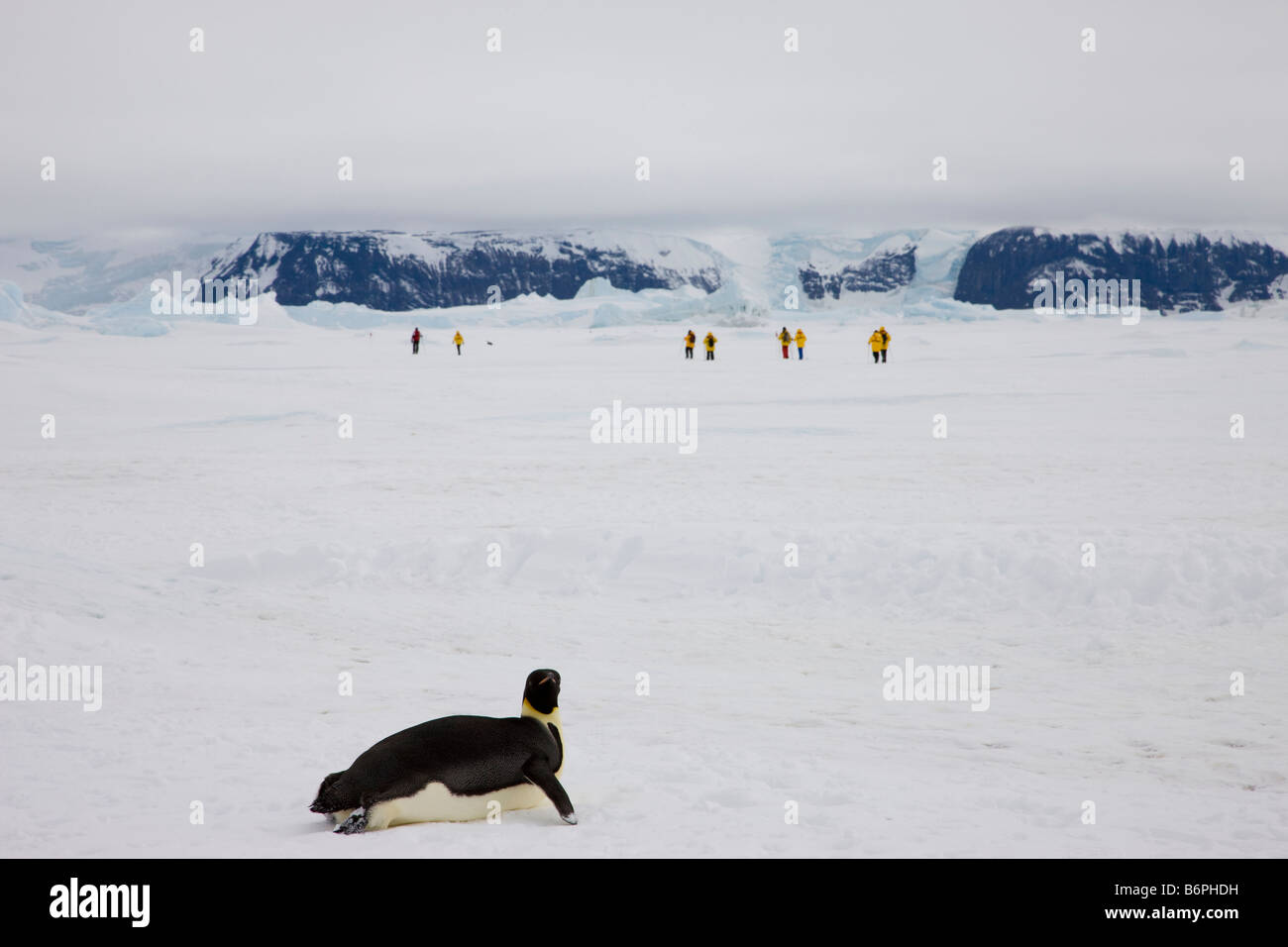 1 Emperor Penguin watches distant ecotourist hikers explore fast ice glacier snow landscape Weddell Sea Antarctica - Stock Image