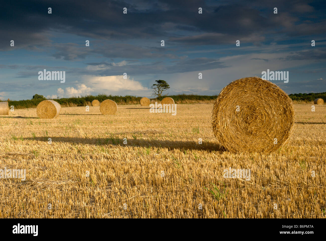 Straw bales in a field - Stock Image