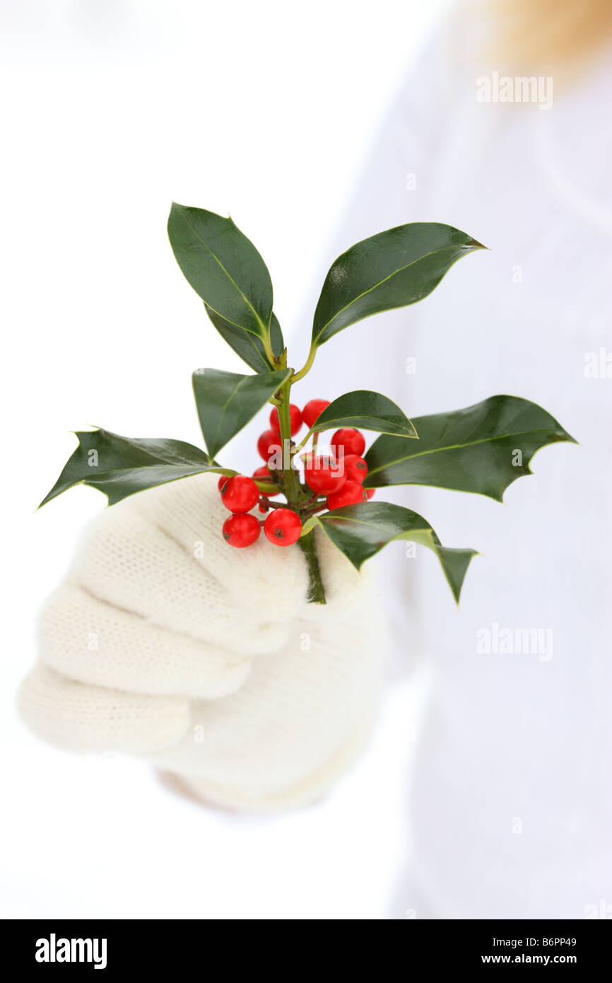 Hands with winter gloves holding Christmas Holly - Stock Image