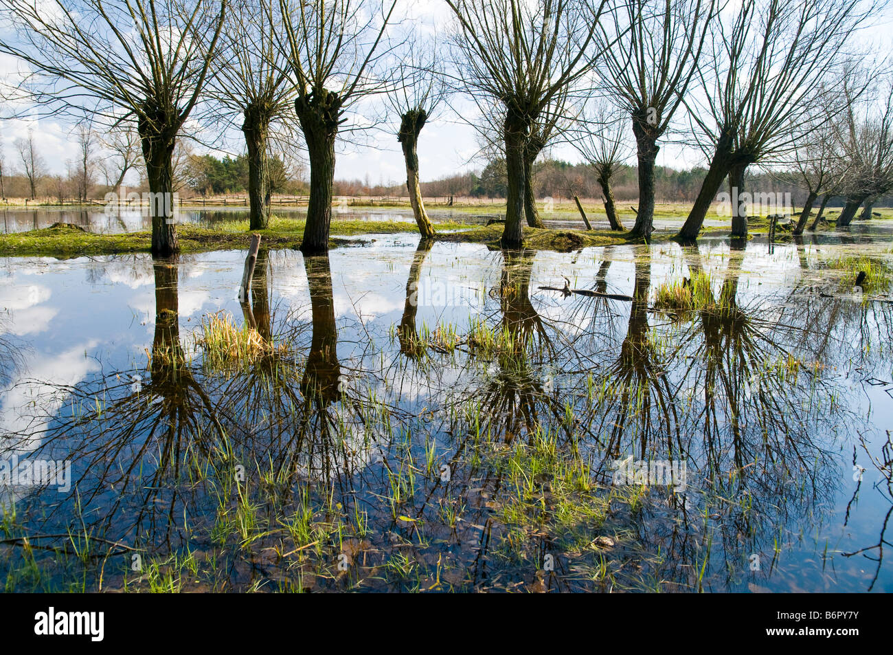 Landscape of willows in Kampinos National Park near Warsaw, Poland Stock Photo